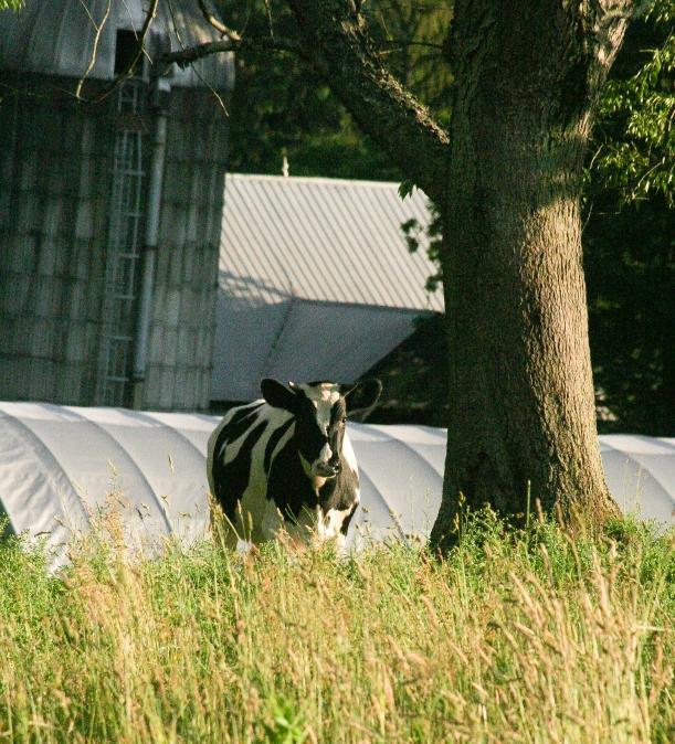 Tynerdale Farm-7543